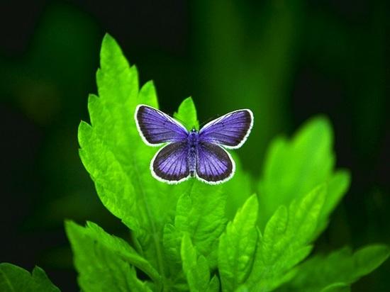 精神の銃 蝶.jpg